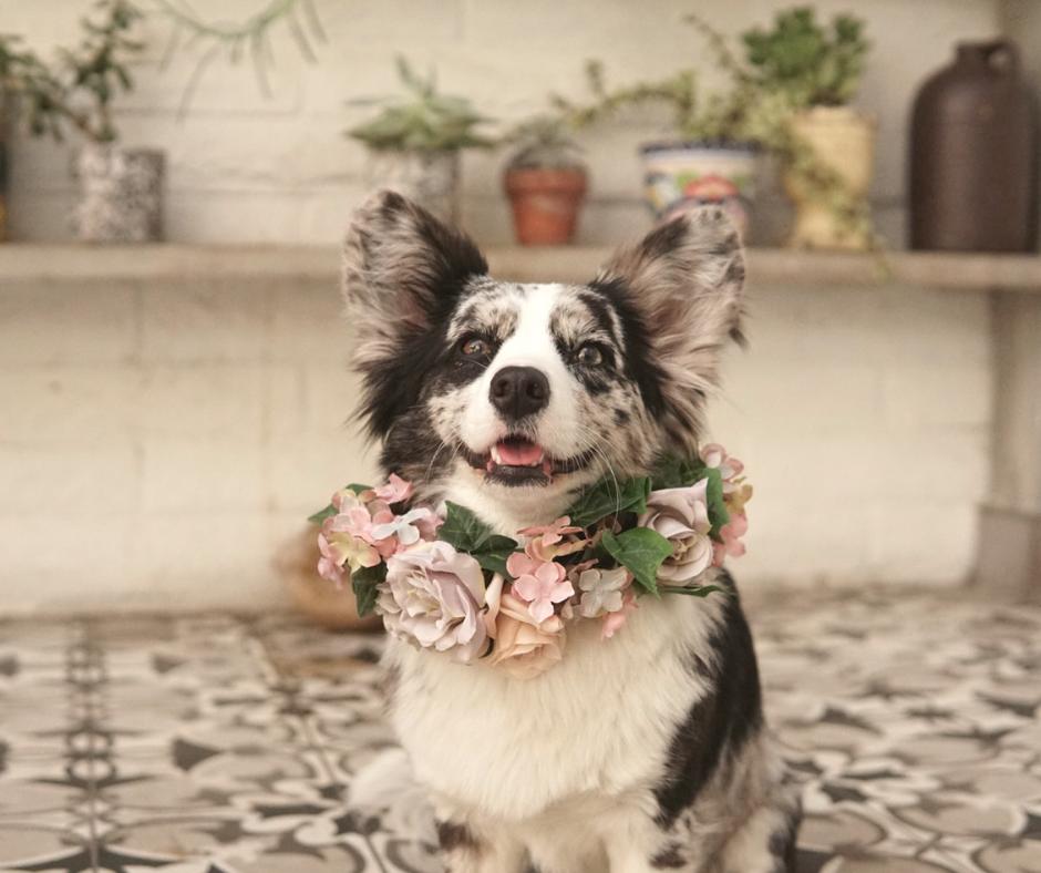 a6bfca68ac83 The Ultimate Spring Bucket List for your Dog – Navy Corgi