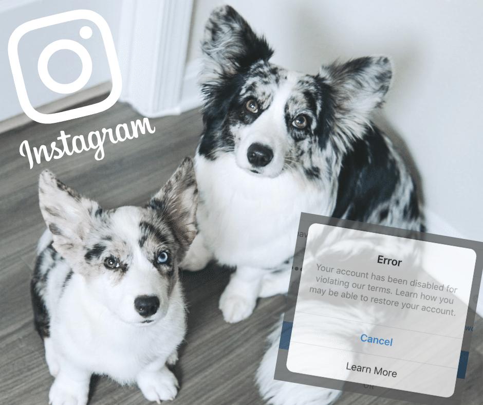 Instagram Deactivated our Account … For No Reason – Navy Corgi