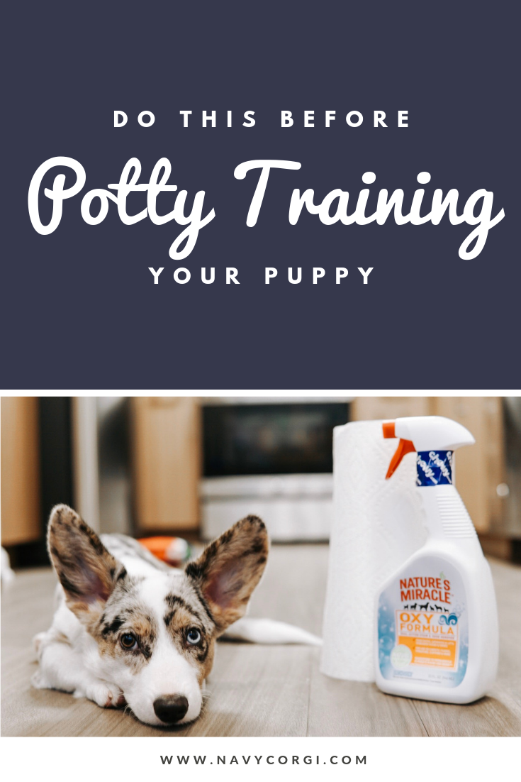 Before You Start Potty Training Your Puppy Do These 6 Things Navy Corgi